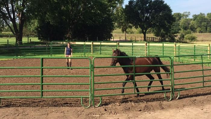 A horse owner working a horse in a round pen.